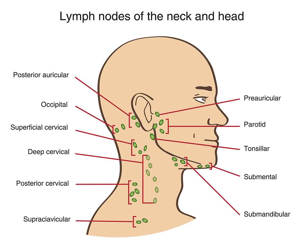 Lymph nodes of the neck and head